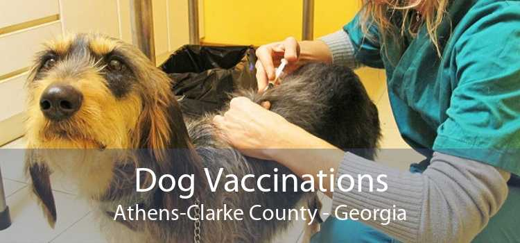 Dog Vaccinations Athens-Clarke County - Georgia