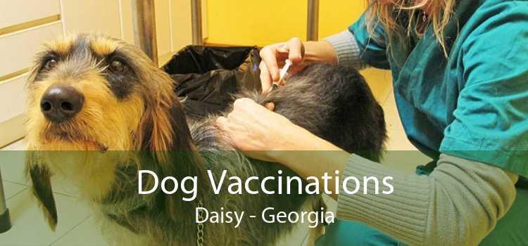 Dog Vaccinations Daisy - Georgia