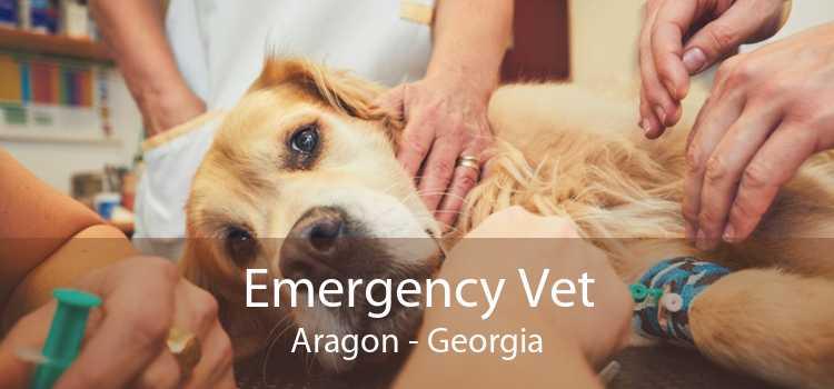 Emergency Vet Aragon - Georgia