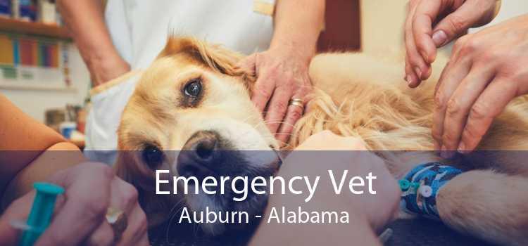 Emergency Vet Auburn - Alabama
