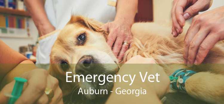 Emergency Vet Auburn - Georgia