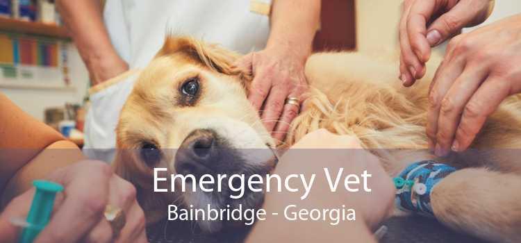 Emergency Vet Bainbridge - Georgia
