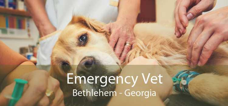 Emergency Vet Bethlehem - Georgia