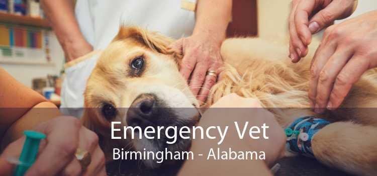 Emergency Vet Birmingham - Alabama