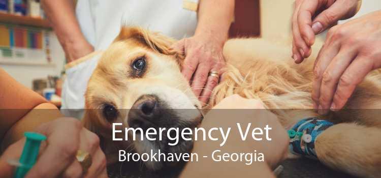 Emergency Vet Brookhaven - Georgia