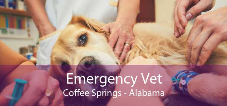 Emergency Vet Coffee Springs - Alabama