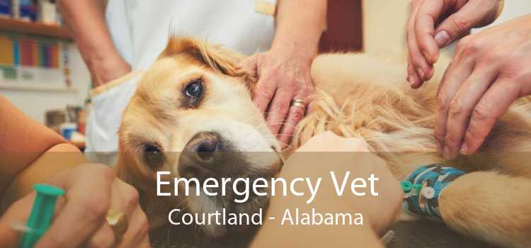Emergency Vet Courtland - Alabama