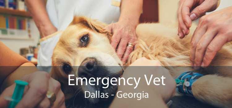 Emergency Vet Dallas - Georgia