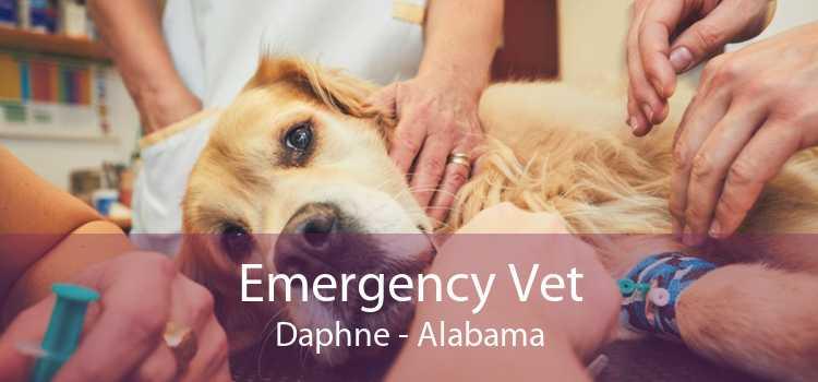 Emergency Vet Daphne - Alabama