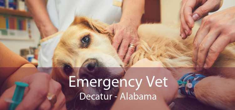 Emergency Vet Decatur - Alabama