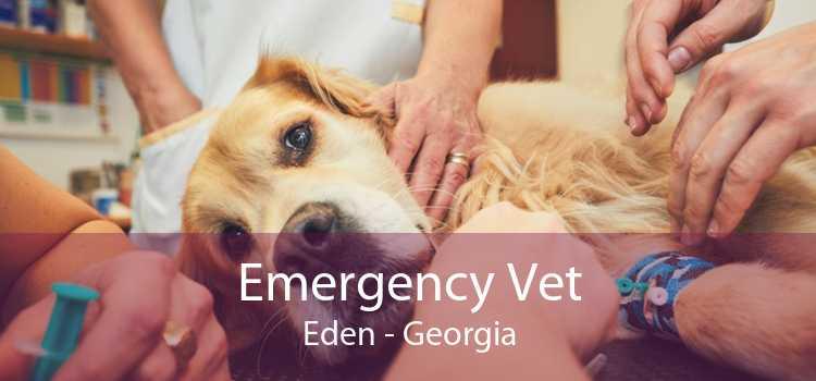 Emergency Vet Eden - Georgia