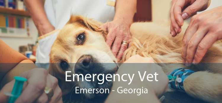 Emergency Vet Emerson - Georgia