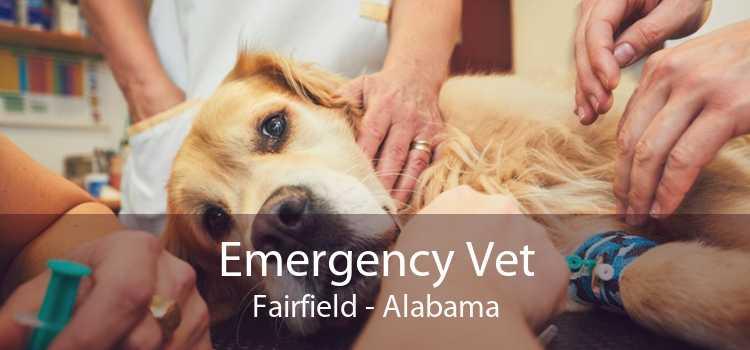 Emergency Vet Fairfield - Alabama