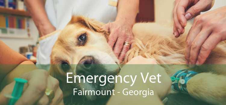 Emergency Vet Fairmount - Georgia