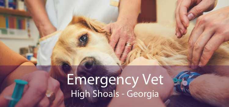 Emergency Vet High Shoals - Georgia