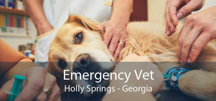 Emergency Vet Holly Springs - Georgia