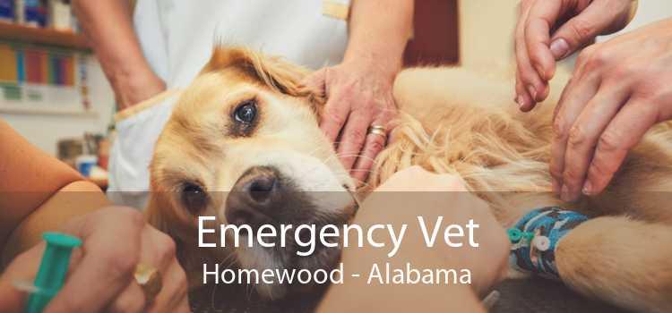 Emergency Vet Homewood - Alabama