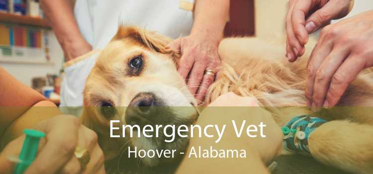 Emergency Vet Hoover - Alabama