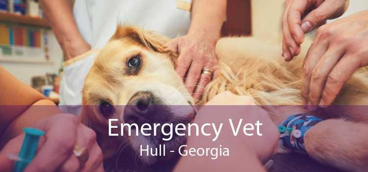 Emergency Vet Hull - Georgia