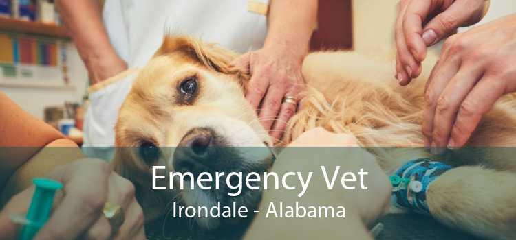 Emergency Vet Irondale - Alabama