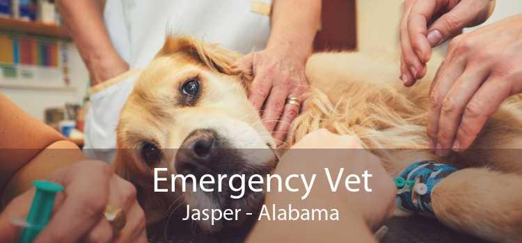 Emergency Vet Jasper - Alabama