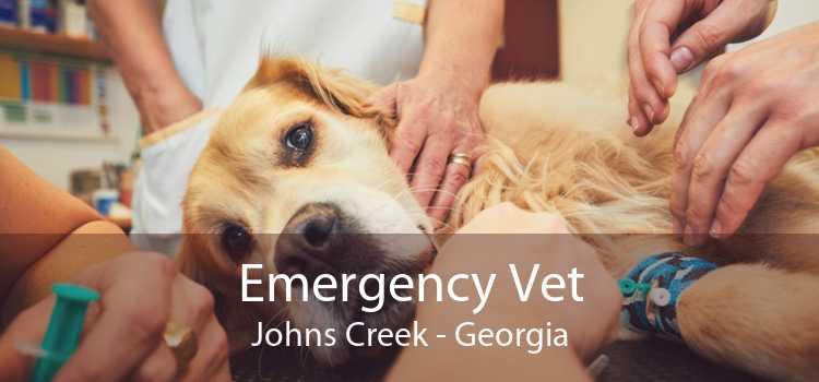 Emergency Vet Johns Creek - Georgia