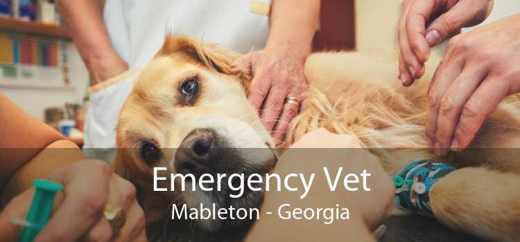 Emergency Vet Mableton - Georgia