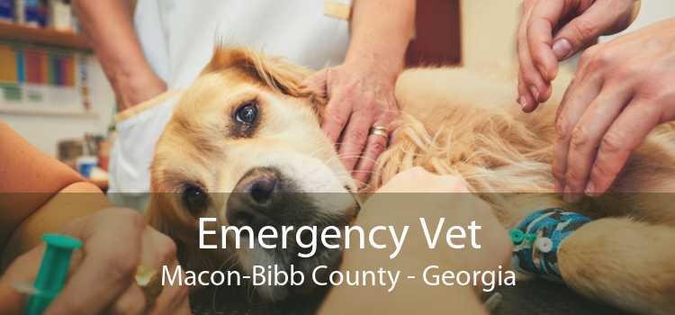 Emergency Vet Macon-Bibb County - Georgia