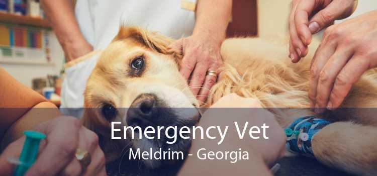 Emergency Vet Meldrim - Georgia
