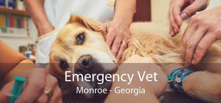 Emergency Vet Monroe - Georgia