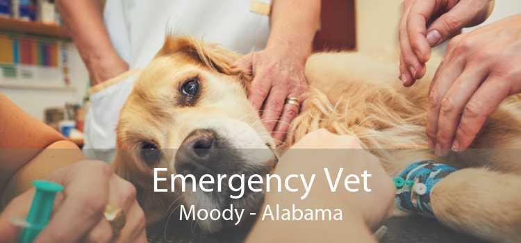 Emergency Vet Moody - Alabama