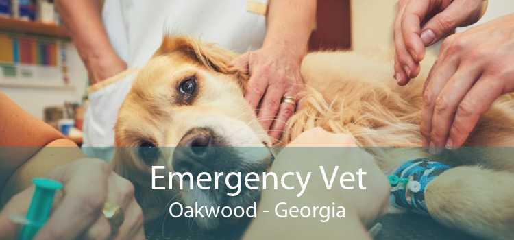 Emergency Vet Oakwood - Georgia