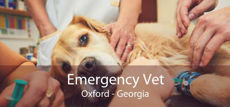 Emergency Vet Oxford - Georgia