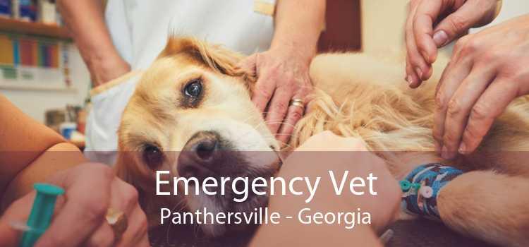 Emergency Vet Panthersville - Georgia