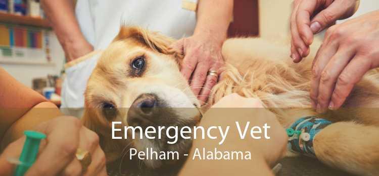 Emergency Vet Pelham - Alabama