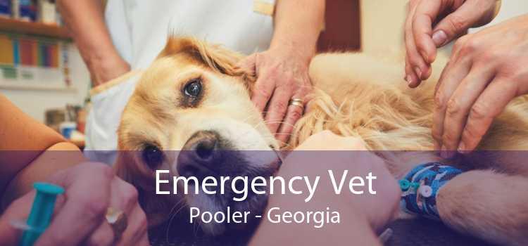 Emergency Vet Pooler - Georgia