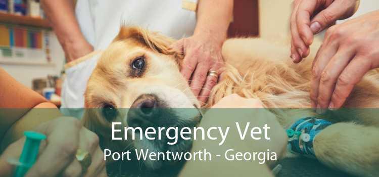 Emergency Vet Port Wentworth - Georgia