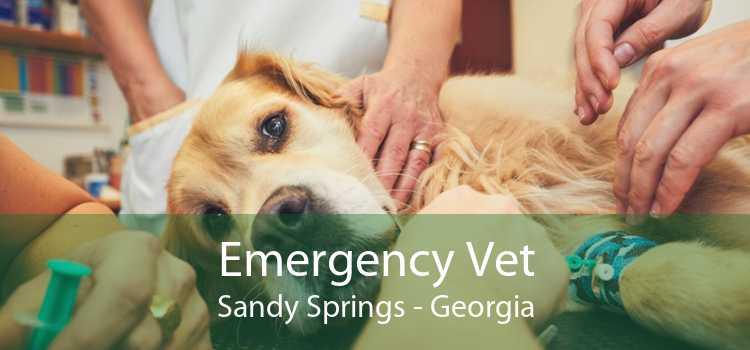 Emergency Vet Sandy Springs - Georgia