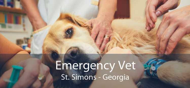 Emergency Vet St. Simons - Georgia