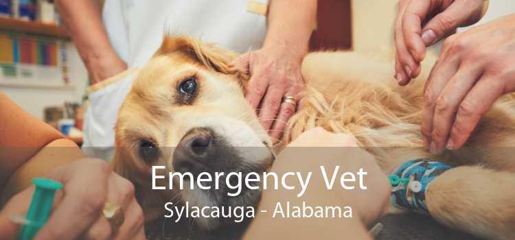 Emergency Vet Sylacauga - Alabama