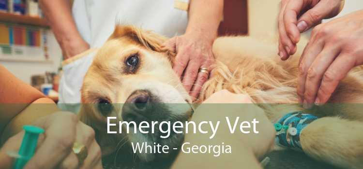 Emergency Vet White - Georgia