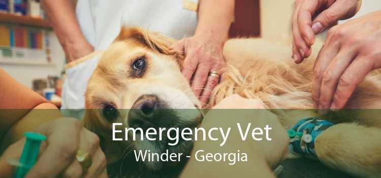 Emergency Vet Winder - Georgia