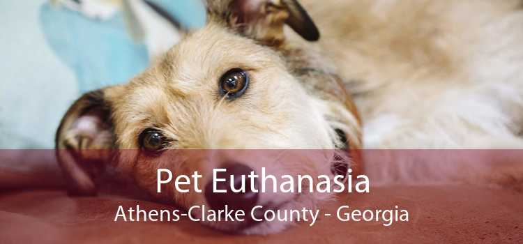 Pet Euthanasia Athens-Clarke County - Georgia