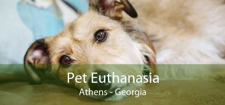 Pet Euthanasia Athens - Georgia