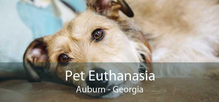 Pet Euthanasia Auburn - Georgia