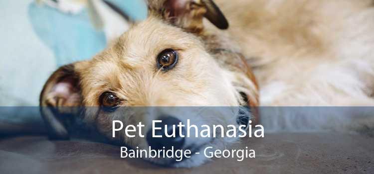 Pet Euthanasia Bainbridge - Georgia