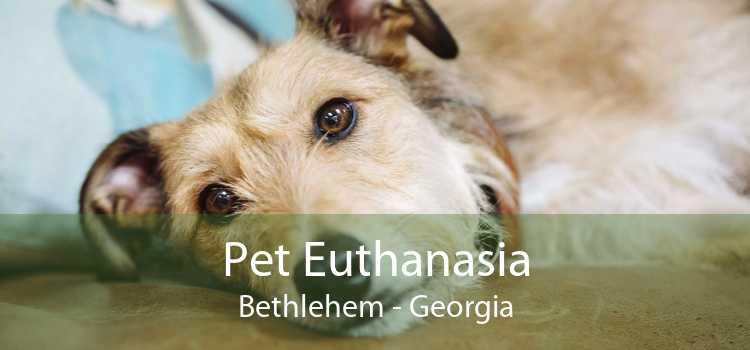 Pet Euthanasia Bethlehem - Georgia