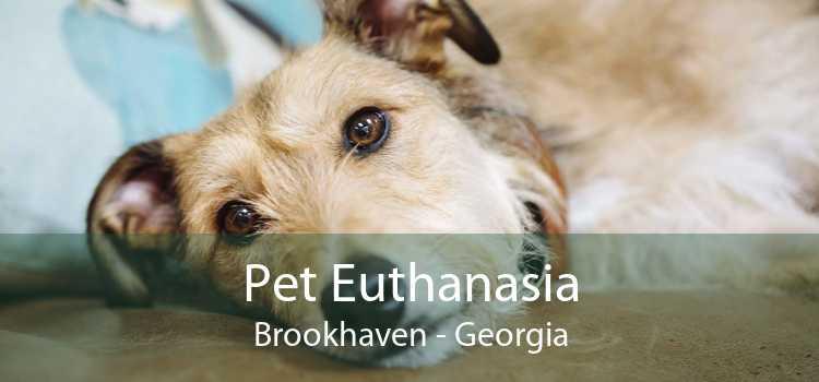 Pet Euthanasia Brookhaven - Georgia