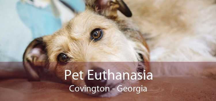 Pet Euthanasia Covington - Georgia