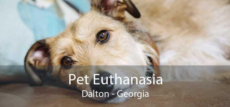 Pet Euthanasia Dalton - Georgia